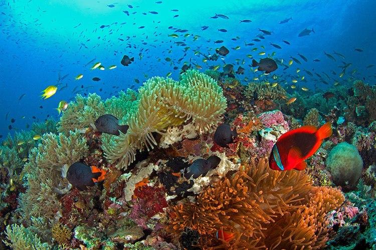healthy-reef-in-balicasag
